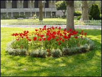 tulipány everywhere